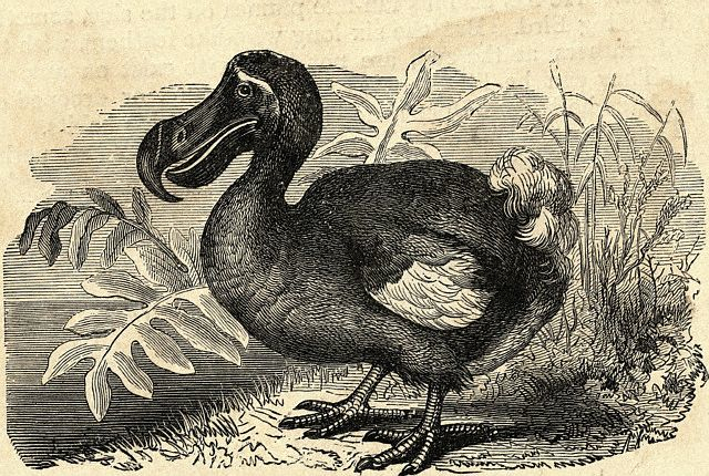 Naked City: Dead as a dodo – Sydney's extinct species