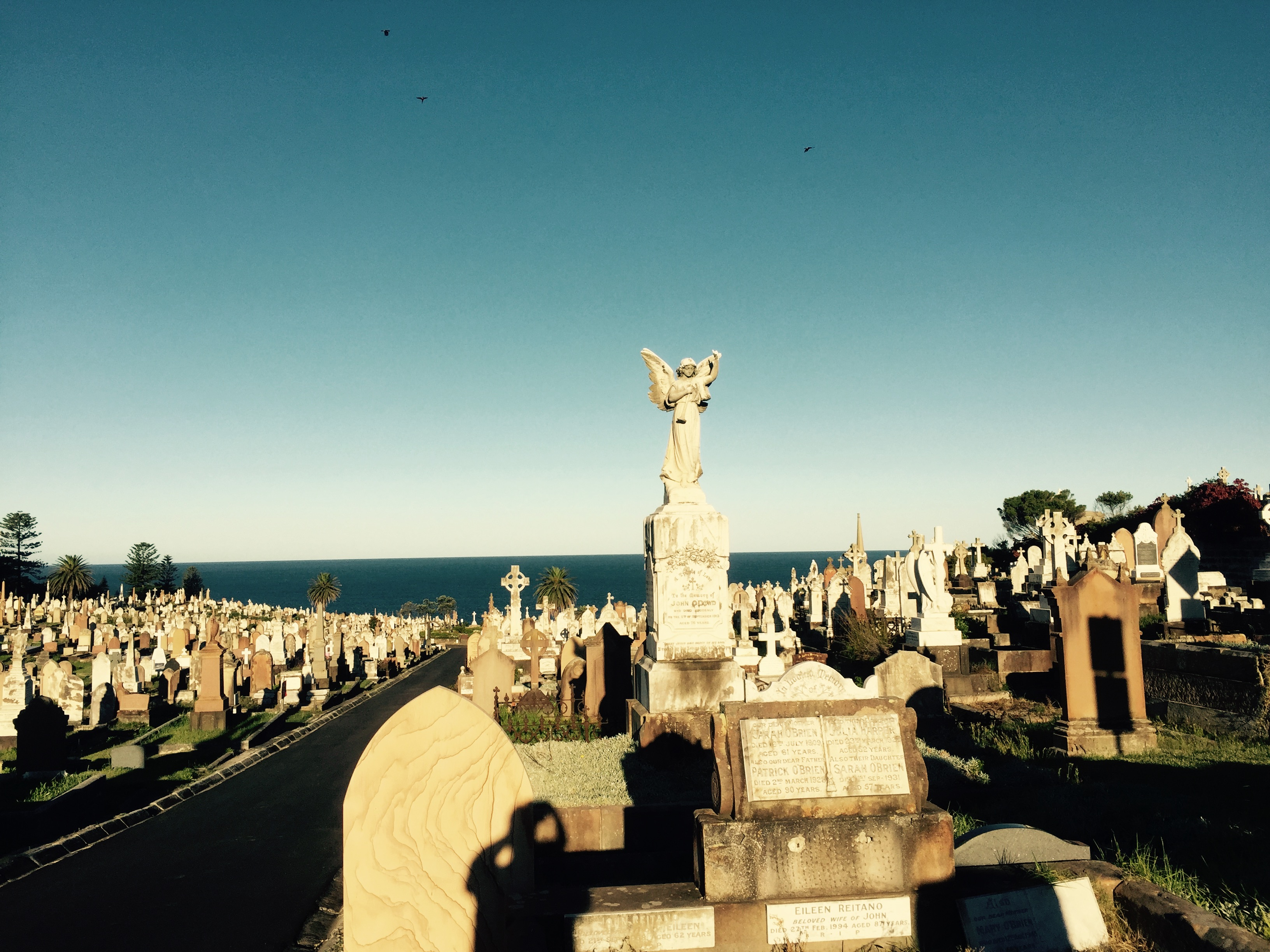 Waverley Cemetery proposal dies in council