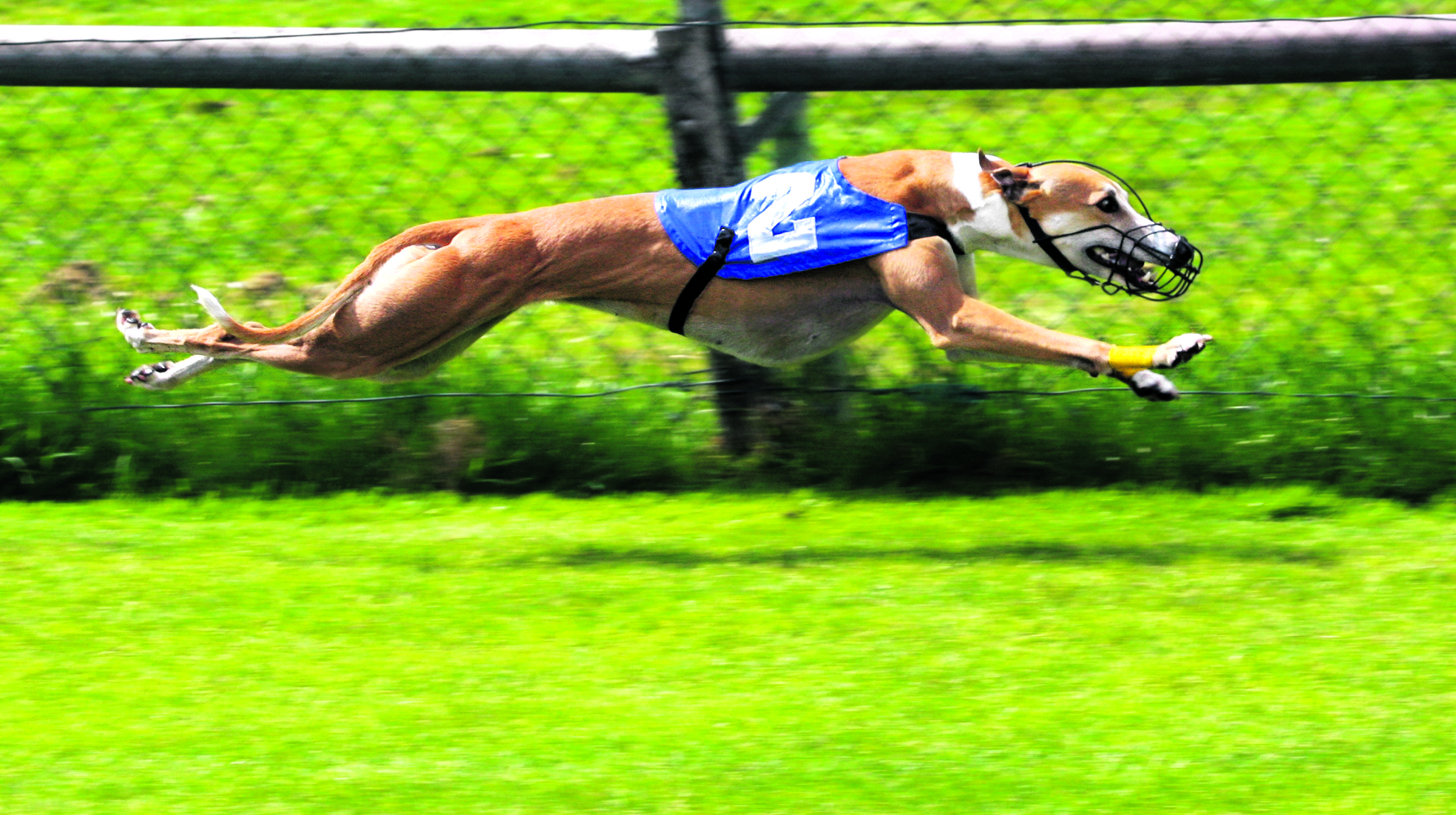 Greyhound racing in the firing line