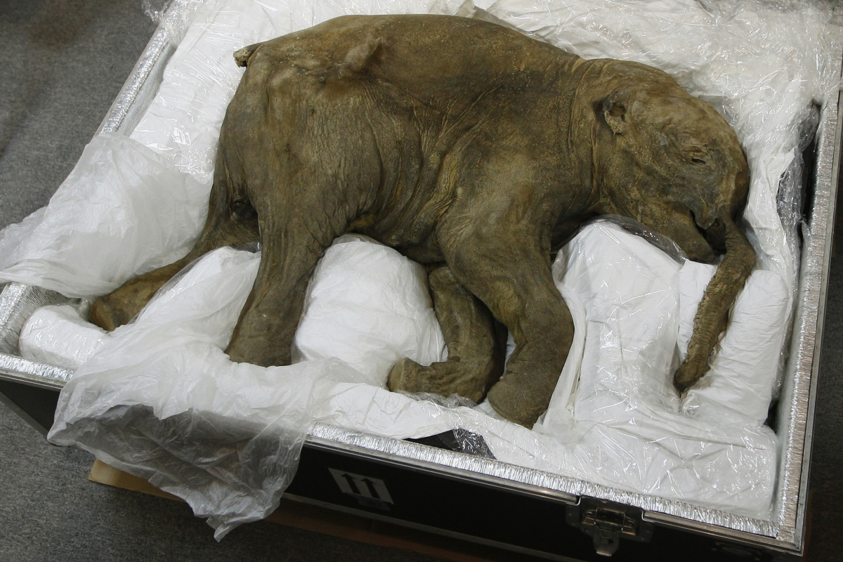 NAKED CITY – A DA VINCI OR A BABY MAMMOTH!