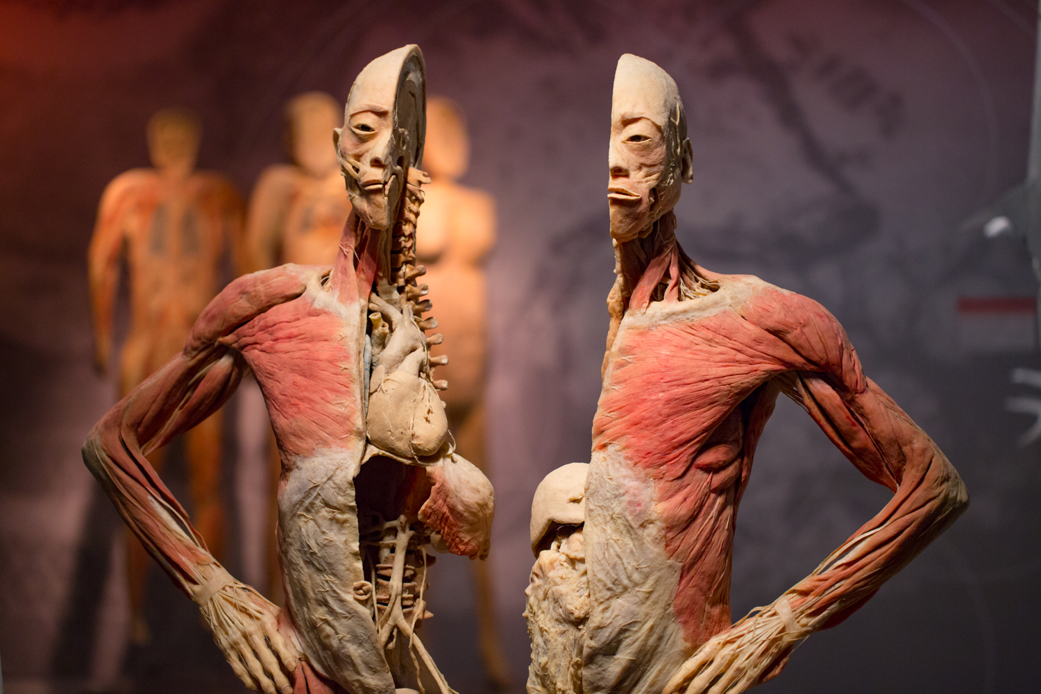 Real Bodies: The Exhibition