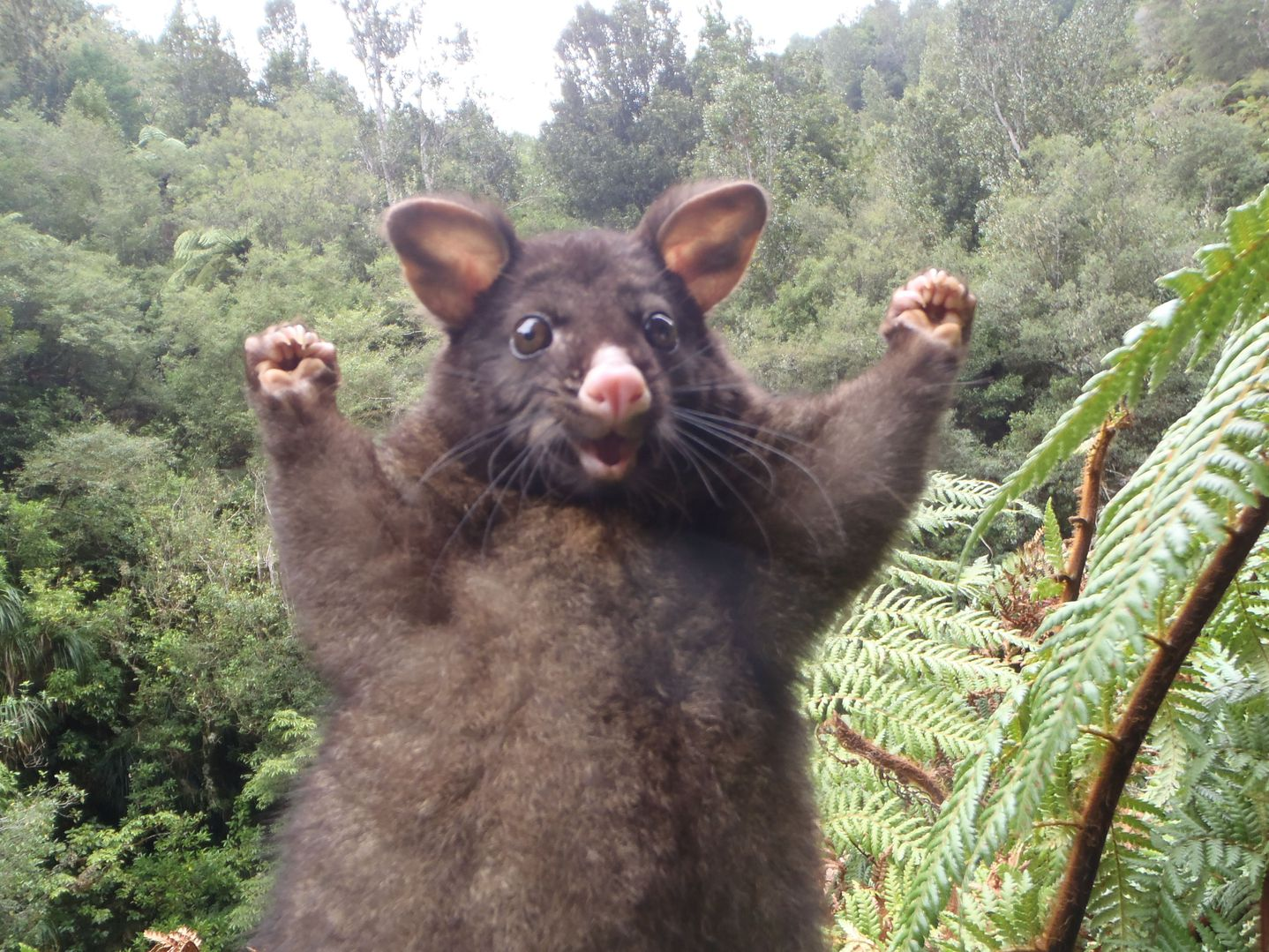 THE NAKED CITY – HELLO POSSUMS!