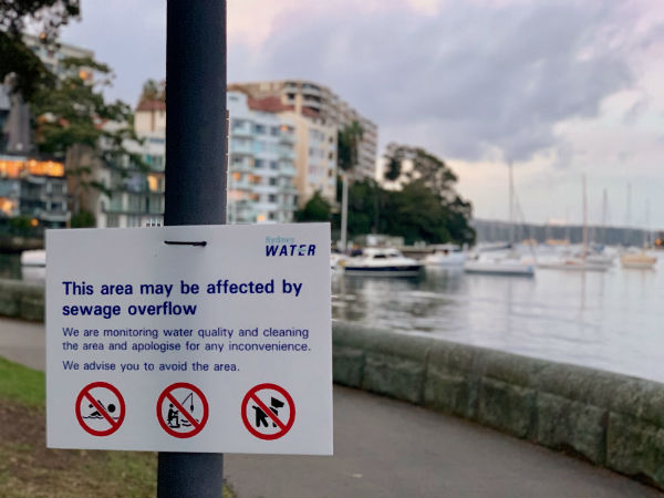 Rushcutters Bay on the nose