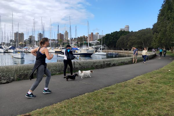 Is a dog poisoner on the loose in Sydney's parks?