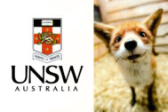 For fox sake: UNSW students rally around feisty fox