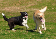 Dog lovers call for off-leash ban to be scrapped