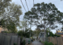 """Trees """"massacred"""" in Inner West while climate crisis worsens"""