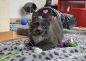 BEST CAT ADOPTION – Cat Protection Society