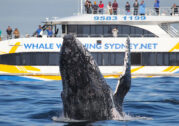 BEST WHALE WATCHING – Whale Watching Sydney