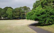Areas of grass car parking to cease at Moore Park